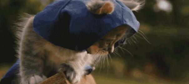 assassins-cat